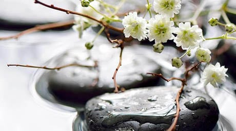 Photo of dark pebbles in shallow water with small white flowers with stems to the right of the pebbles, for information on holistic dentistry from Kentucky Dental Group of Lexington.